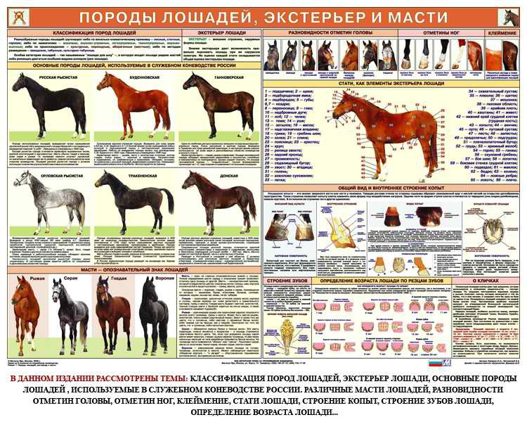 Все о породе лошади экстерьер